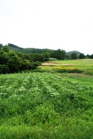 20100808_08.jpg